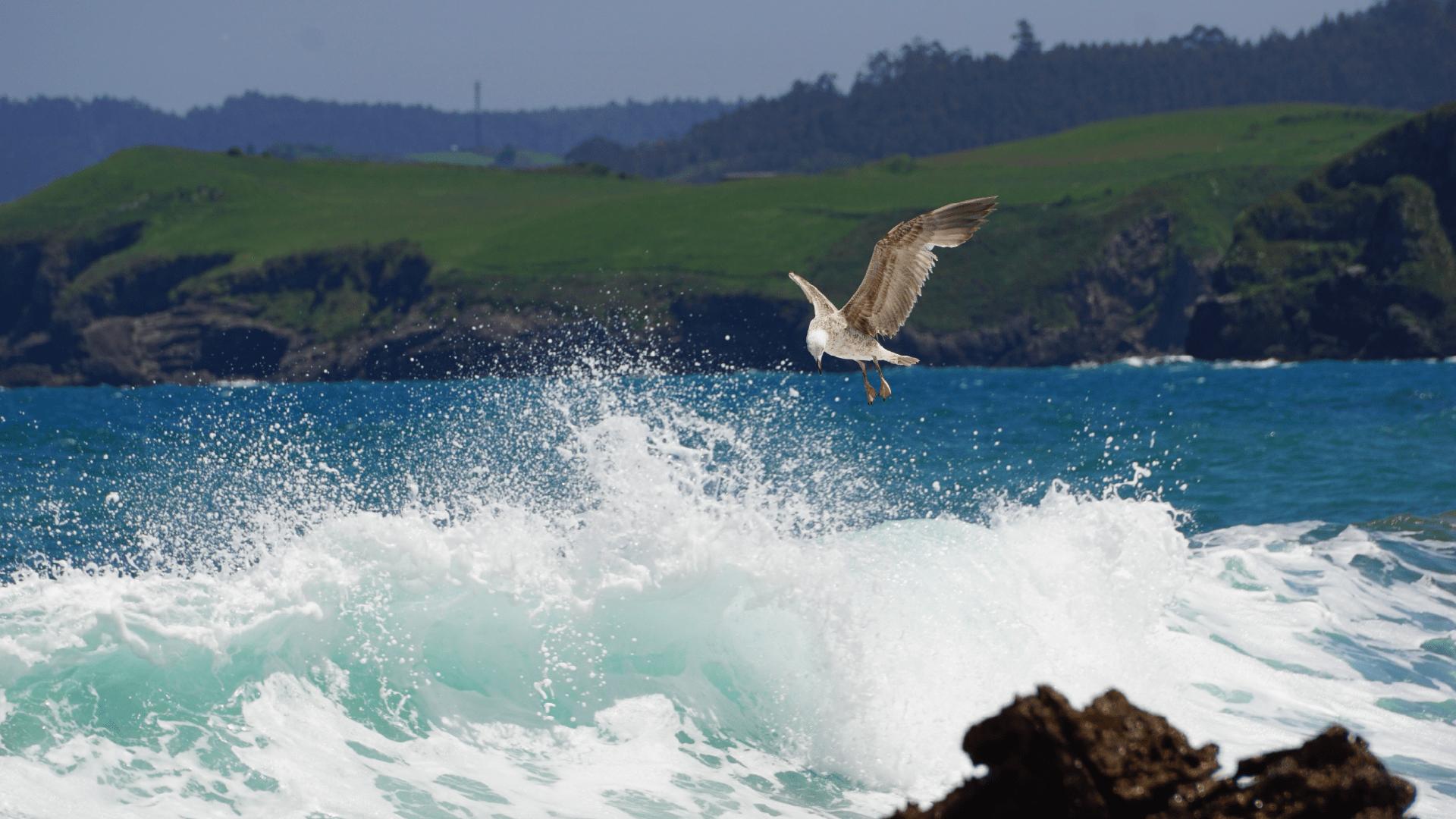 Wind Beneath my Wings_Featureg_Image